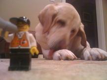 Giant Puppy - C. R.