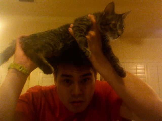 Cat on Dome - Nath J.