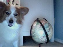 Giant Puppy - Sarah W.