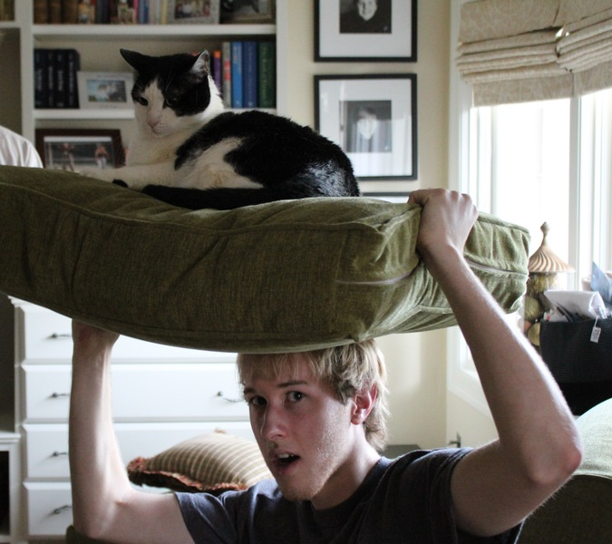 Cat on Dome - Andrew Finch